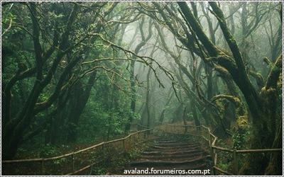 Floresta - Página 2 15676540_3hric